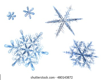 set of natural snowflakes on a white background