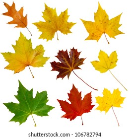 Set of nine isolated autumn leaves