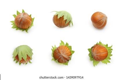 Set of nuts hazelnuts isolated on white background.