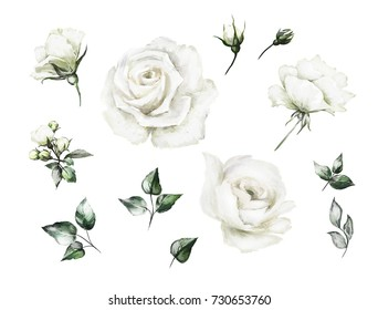 Set oil painting elements of white rose, collection garden flowers, leaves.  Botanic  illustration isolated on white background.  bud of roses