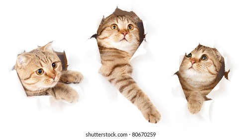 set of one cat in paper side torn hole isolated
