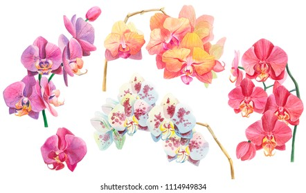Set of Orchid Branch Watercolor. Hand Drawing Floral Illustration. Orange, Pink, Purple, White Blue with Purple Dots Tropical flowers isolated on White Background.
