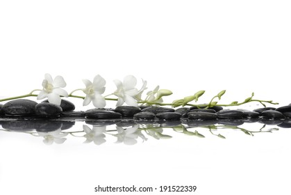 Set of orchid with bud and black stones with reflection