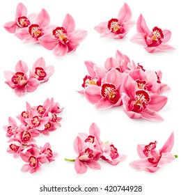 Set of orchid flowers isolated on white background