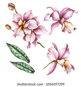 Set of Orchids. Hand draw watercolor illustration.