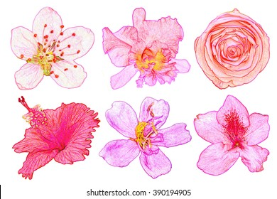 Set of painting flowers on white background.