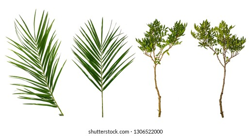 Set of palm leaves and tree branches isolated on white background