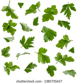Set of parsley leaves, isolated on white. Natural ingredients for salads and other food.