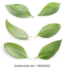 A set of perfect fresh basil isolated on white background.