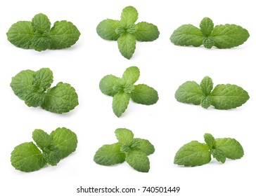 A Set of Perfect Green Mint Leaf Isolated on White Background.