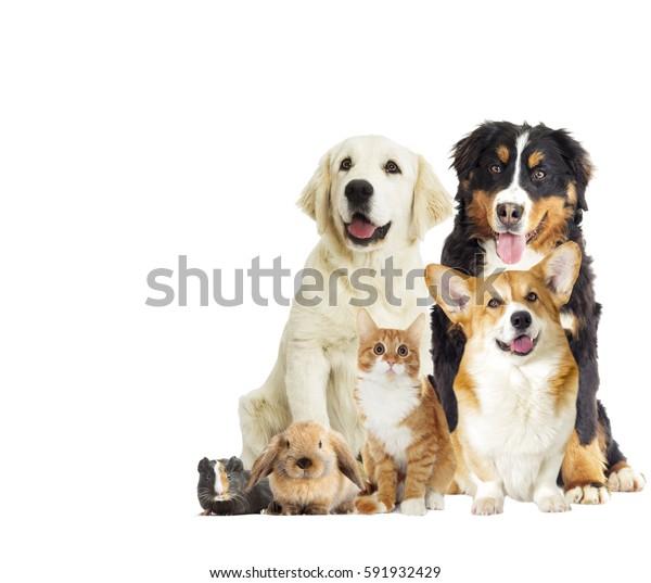 set pet on a white background