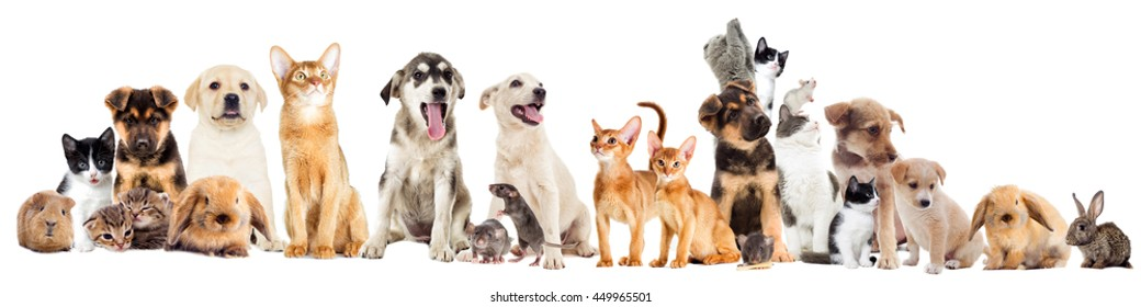 Small Animals Images, Stock Photos & Vectors | Shutterstock