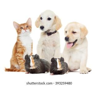Set pets  looking