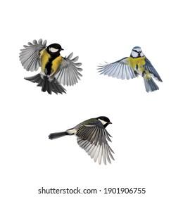 set of photos of birds titmice and lapis lazuli on a white isolated background