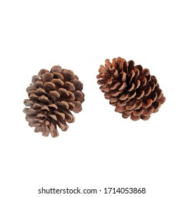 set of pine cones on a white background