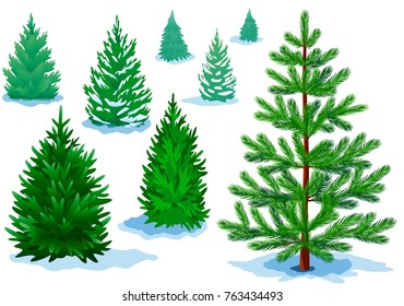 A set of pine trees, fir trees with varying degrees of detail. Raster version.