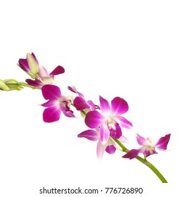 Set of Pink orchid isolated