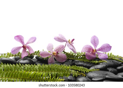 Set of pink orchid and stones with green fern on stones