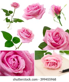 Set of pink roses isolated on the white background.