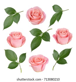 Set with pink roses and leaves. As design elements.