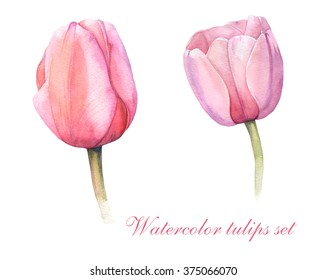 set of pink watercolor tulips