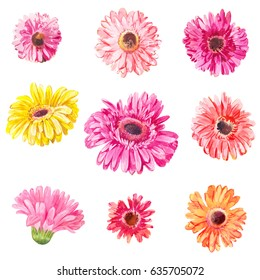 Set of pink and yellow gerbera's heads isolated on white. Watercolor flowers