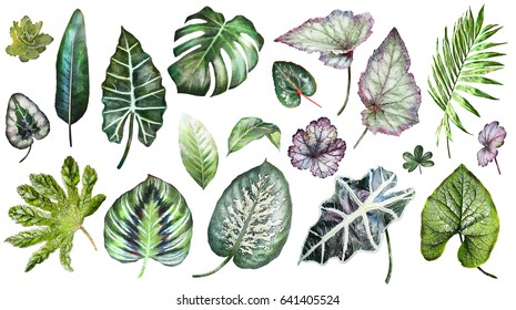 Set plants elements - herbs, leaf. tropical collection leaves. Botanical illustration isolated on white background, exotic. watercolor style. Green nature