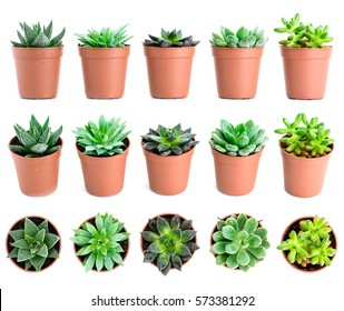 Set of pot plant Echeveria and other succulents in different types isolated on a white background