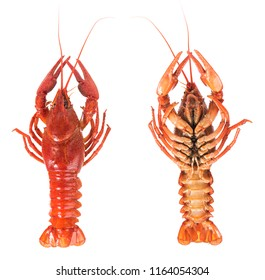 Set of prepared big crayfish isolated over white background cutout