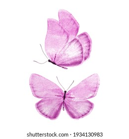 set of purple butterflies isolated on a white background. High quality photo