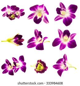Set Purple orchid isolated