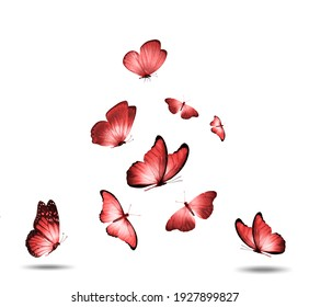 set of red flying butterflies isolated on a white background