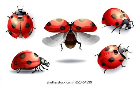 set of red ladybug isolated on white. raster illustration
