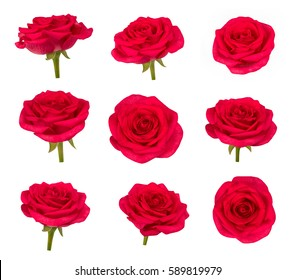 Set of red rose flowers in different camera angles isolated on white background, elements for design collage, variety of views