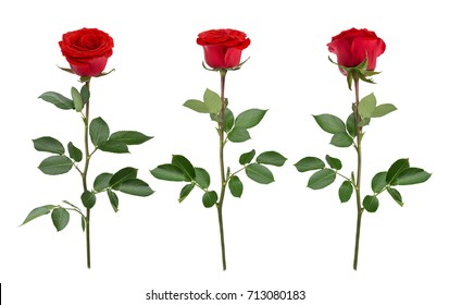 Set with red roses. As design elements.