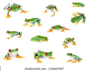 Set of red-eye tree frog  Agalychnis callidryas isolated on white