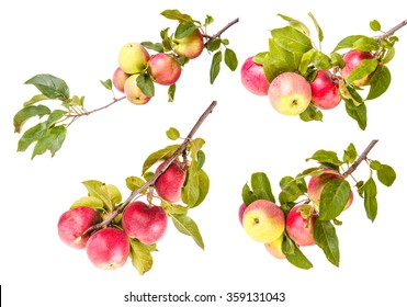 Set ripe apples on a branch isolated on white background