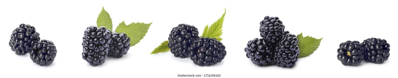 Set of ripe blackberries on white background. Banner design