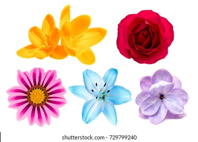 Set of rose, lilac, lily, crocus, gerbera flowers isolated on white background. Top view
