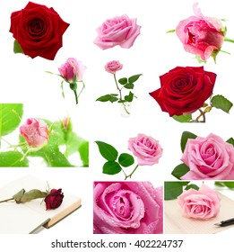 Set of roses isolated on the white background.