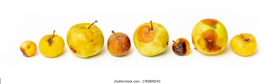 Set of rotten spoiled apples on a white background. A worm is crawling over the apple.