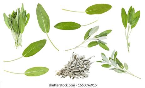 Conjunto de salvia (salvia officinalis) hojas y hierbas aisladas sobre fondo blanco