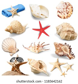Set of sea shells isolated on white
