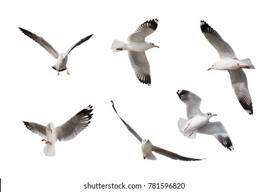 set of seagulls isolated on white background.
