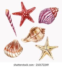 Set with sea-shells