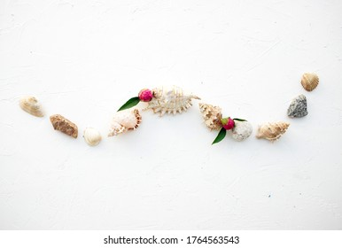 Set of seashells on a beautiful white  background. Place for inscription. Postcard.