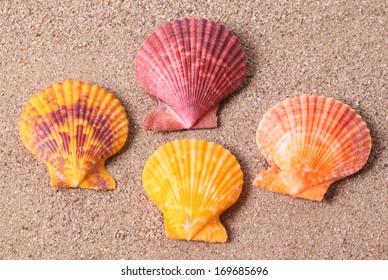 Set of seashells on sand background