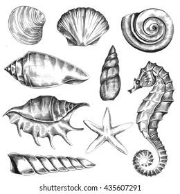 Caracol De Mar Tattoo