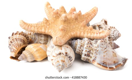 set of seashells with starfish on a white background