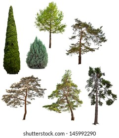 set of seven coniferous trees isolated on white background
